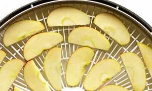 Условия и особенности сушки яблок в электросушилке для овощей
