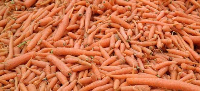 Выбор, подготовка и способы сохранения моркови свежей до весны