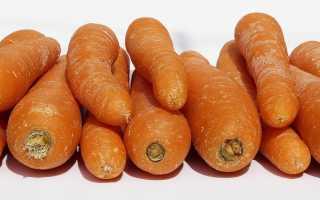 Можно ли хранить морковь в вакуумных пакетах – правила, проблемы и советы специалистов