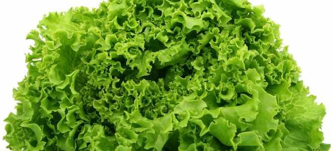 Как правильно заморозить листья салата на длительное хранение