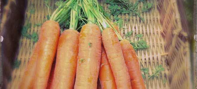 При какой температуре замерзает морковь на балконе и как этого не допустить: практические советы