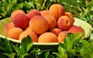 Как правильно хранить свежие абрикосы – проверенные способы