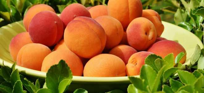 Как правильно хранить свежие абрикосы