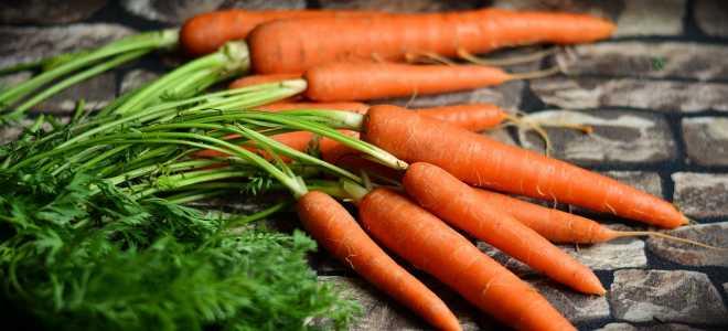 Особенности и преимущества хранения морковки в полиэтиленовых пакетах в погребе