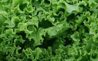 Способы сохранить листовой салат на зиму – сушка, заморозка, маринование