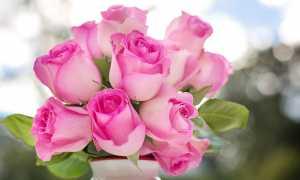 Правила и секреты долгого хранения букета из роз