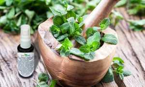 Как сохранить свежесть и аромат листьев мяты – проверенные способы