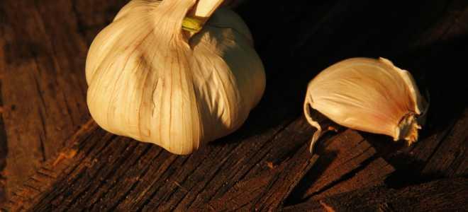 10 способов сохранить чеснок свежим до весны