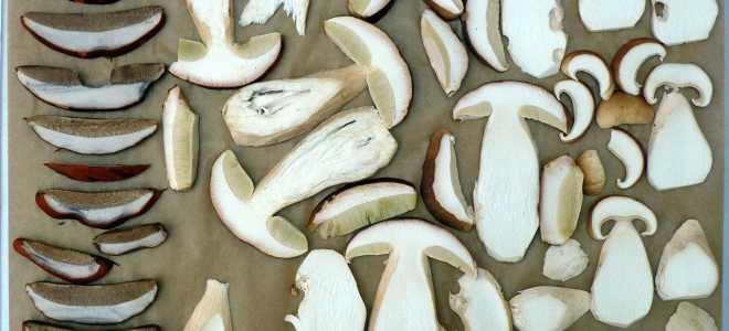 Как правильно засушить белые грибы — домашние способы, сколько и как хранить