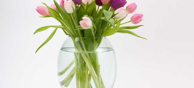 Общие правила и секреты долгого хранения букета цветов