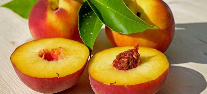 Вкусные рецепты правильной заморозки персиков