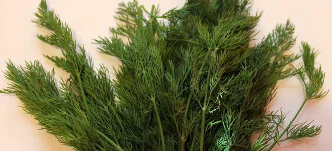 5 простых способов заморозить укроп не растеряв аромата и пользы