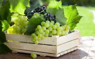 Способы сохранения свежего винограда на всю зиму