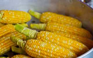 Как правильно хранить свежие початки кукурузы в домашних условиях