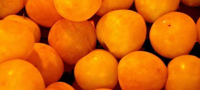 Вкусные рецепты и правила заморозки абрикос на зиму