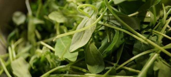 Заготовка рукколы на зиму без потери полезных свойств (сушка и заморозка) и рецепты из замороженного салата