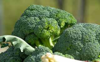 Простые советы как сохранить капусту брокколи надолго свежей