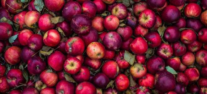 Лучшие способы хранения яблок в домашних условиях
