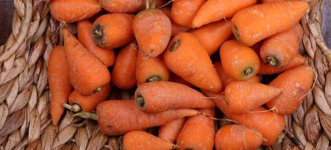 Технология хранения морковки в песке
