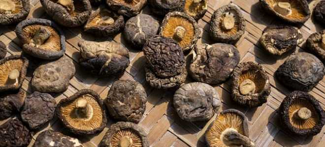 Как сушить грибы в домашних условиях – на нитке, в духовке, в аэрогриле и электрической сушилке