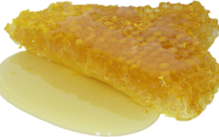 Хранение меда в сотах: где и как хранить соты с медом дома