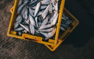 Правила хранения свежей рыбы в холодильнике