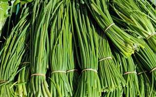 Правила хранения свежих перьев зеленого лука