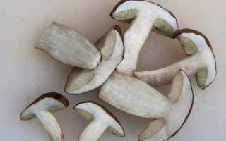 Сколько и как хранить вареные грибы – в холодильнике и без, в банках и морозилке