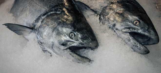 Долго ли можно хранить рыбу в морозилки и как ее правильно размораживать?
