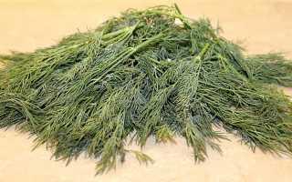 Правила заготовки сушеной зелени