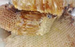 Замороженный мед – что будет если заморозить мед