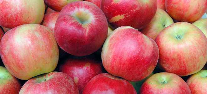 6 рецептов для хранения яблок в морозилке