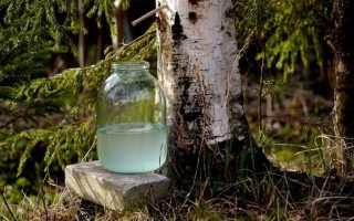 Березовый квас – самый вкусный и длительный способ хранения березового сока