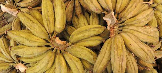 Как сделать вяленые бананы в домашних условиях