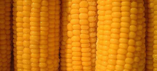 Заморозка кукурузы на зиму