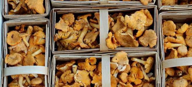 Как и сколько можно хранить грибы после сбора