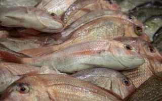 Простые правила замораживания свежей рыбы