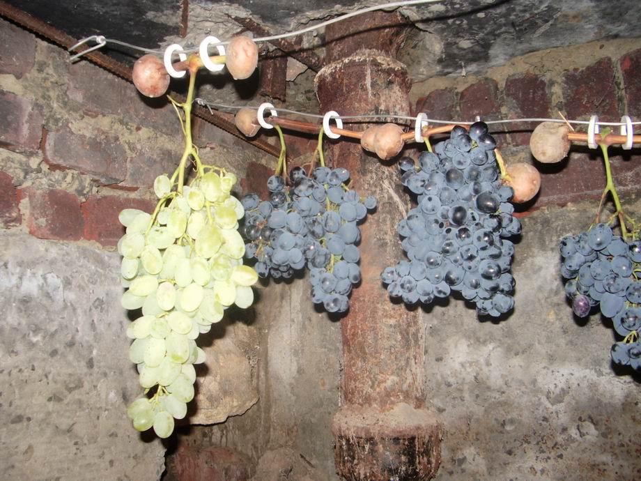 Виноград на проволоке