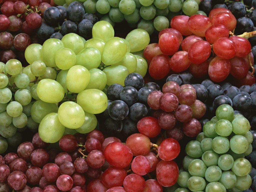Cорта винограда