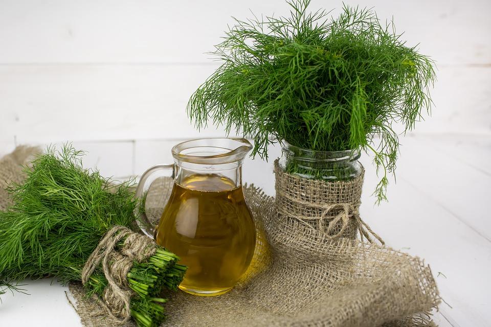 Пучки укропа и оливковое масло