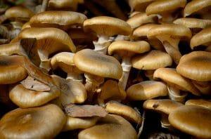 как заморозить грибы свежие