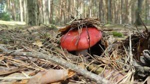 заморозить грибы